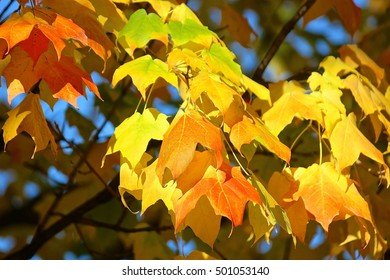 Fall orange and yellow color tree leaves, autumn colors
