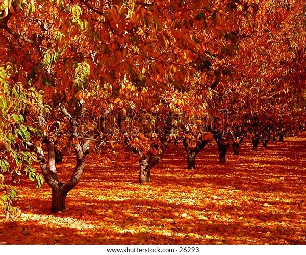 fall orchard