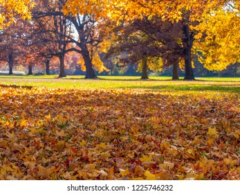 Fall in the park, background image with no people and copy space.
