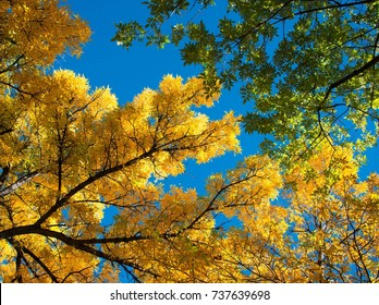 Fall in the park Santa Fe New Mexico