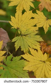 fall   pattern, leaf, natural,