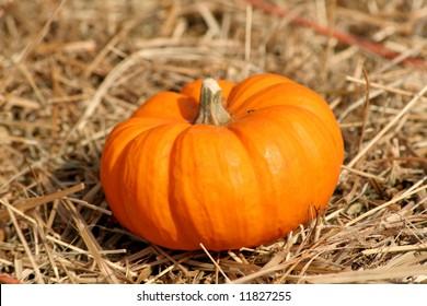 Fall Pumpkin on straw