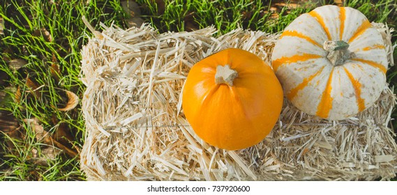 Fall pumpkins on hay in the grass with green background