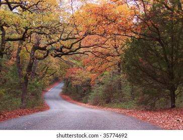 Fall road in Texas