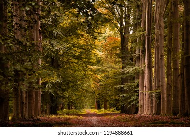 Fall scene pf a beautiful forrest with a walking path
