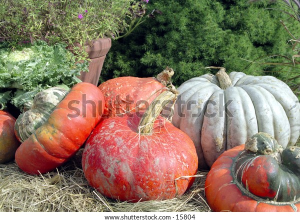 Fall scene with pumkins and gourds