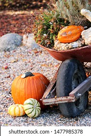 A fall scene with pumpkins and gourds in an old wheelbarrow surrounded by a xeriscape yard