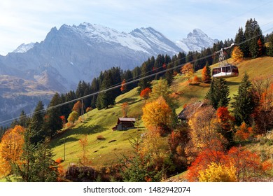 Fall scenery of a cable car gliding over colorful trees on a grassy hillside near Gimmelwald & Murren, with snow-capped Alpine mountains in background, in Lauterbrunnen, Bernese Highlands, Switzerland