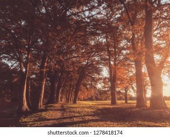 Fall scenery in New Braunfels, Texas, USA