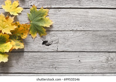 Fall season background, yellow oak leaves on rustic wood background with copy space.