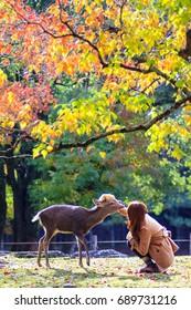 The fall season with beautiful maple color at Nara Park, Japan