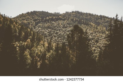 Fall season in Carpathian mountains.Beautiful mountain landscape in autumn.Instagram vintage film filter with fading color