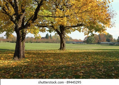 Fall season color changes in a park, Portland OR.