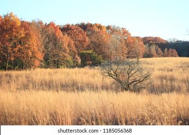 Fall Season - grass prairie at  the edge of the forest