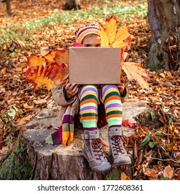 Fall season, hello autumn. Stylish 7 years old girl sitting on the stub in the forest and holding a box with golden leaves, place for text, cope space, family weekend, beautiful nature outside