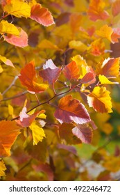 Fall season natural colorful background. Bright autumnal leaves, macro photo with selective focus