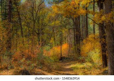 Fall in Sedona Arizona USA