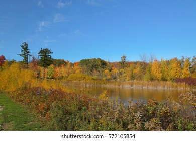Fall, a small pond surrounded by red and yellow bushes