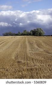 fall stubble field