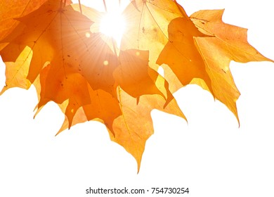 The fall sun shines through yellow leaves