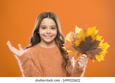 Fall symbol. Simple bouquet. Collecting leaves. Natural treasures. Changes in nature. Happy little girl with maple leaves. Small child hold autumn leaves. Cute happy smiling kid playing with leaves.