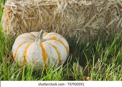 Fall tiger pumpkin in the grass near hay, close up