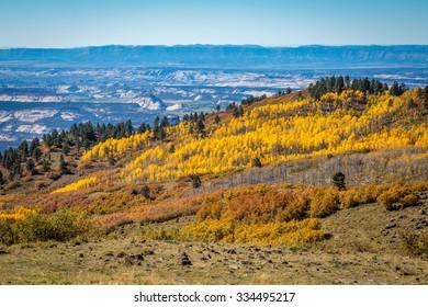 Fall Tree Landscapes