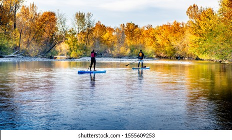Fall tree line the Boise river with Paddle Boarders