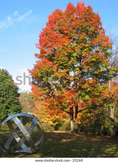 Fall tree and statue.