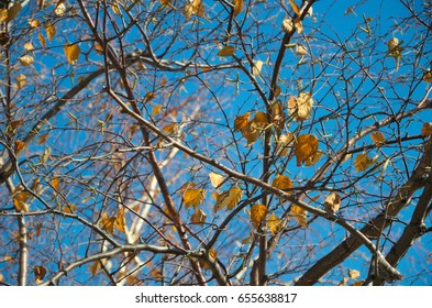 Fall trees with bare branches still hold a few leaves