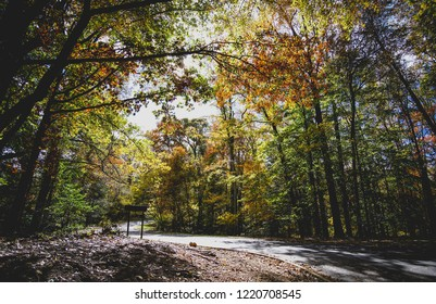 fall trees hanging over the road