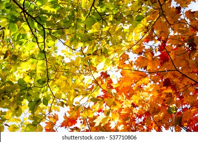 Fall trees and leaves