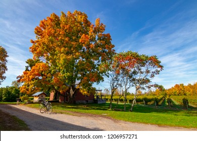 FALL TREES ON FARM WITH BICYCLES - Daytime wide shot of colorful fall trees with bikes parked on dirt pathway. Bike riding and enjoying seasonal autumn weather. Wine tour exploring. Ontario, Canada