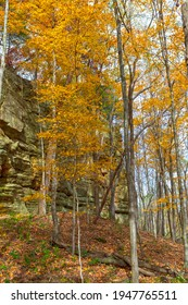 Fall Trees in a Secluded Canyon in Illinois Canyon in Starved Rock State Park in Illinois