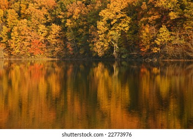 fall trees and water
