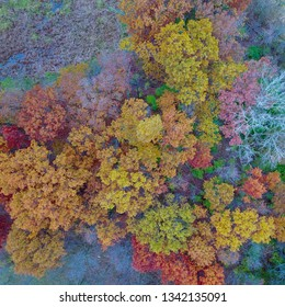 Fall treetops drone picture in Michigan