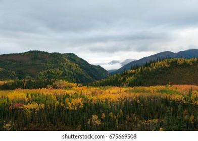 Fall Tundra Alaska