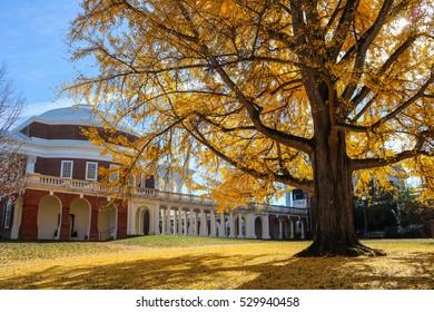 Fall at UVA