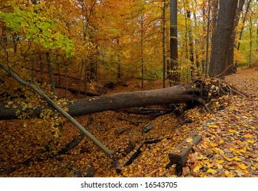 Fall in Washington DC, Rock Creek park 2