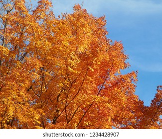 Fall in West Virginia displays the more majestic colors of autumn for which the Northeast is so famous.