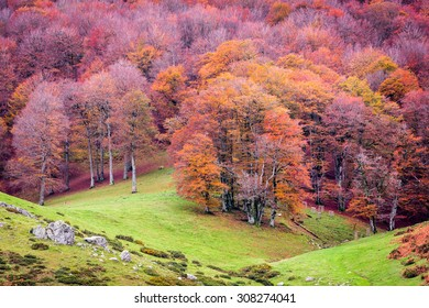 Fall in western Spanish Pyrenees 1