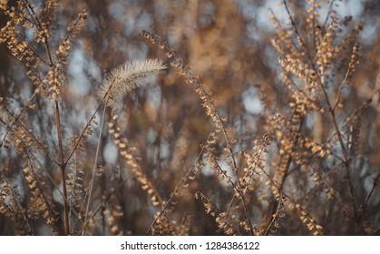 fall wheat field