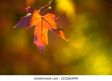 Fall/autumn background -Maple leaf