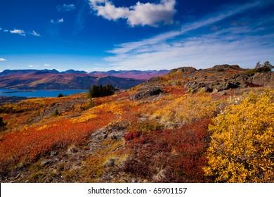 Fall-colored boreal forest at shores of Fish Lake, Yukon Territory, Canada.
