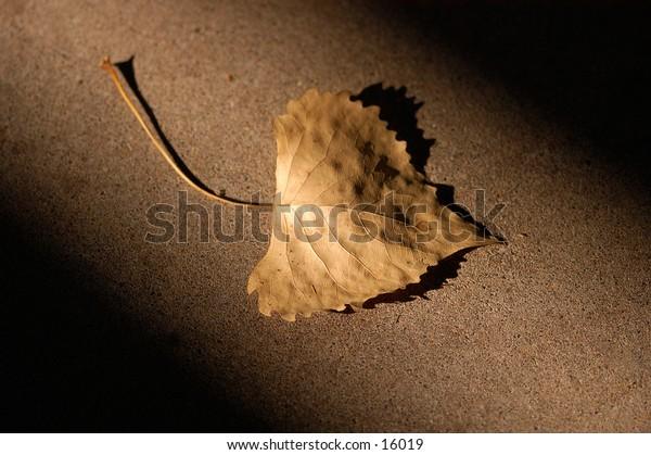 A fallen autumn leaf in a shaft of light.