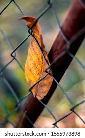 A fallen autumn leaf stuck in an old oxidized fence.