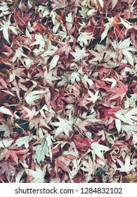 Fallen autumn leaves as a background, with muted red tones
