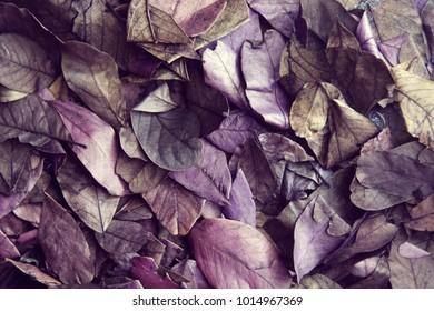 Fallen autumn leaves color ultraviolet