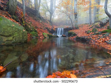Fallen autumn leaves in a forest stream
