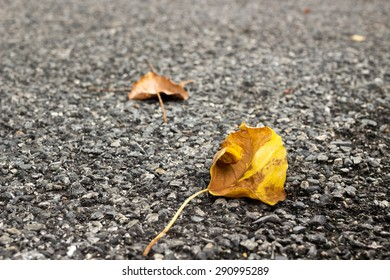 Fallen autumn leaves laying on the ground